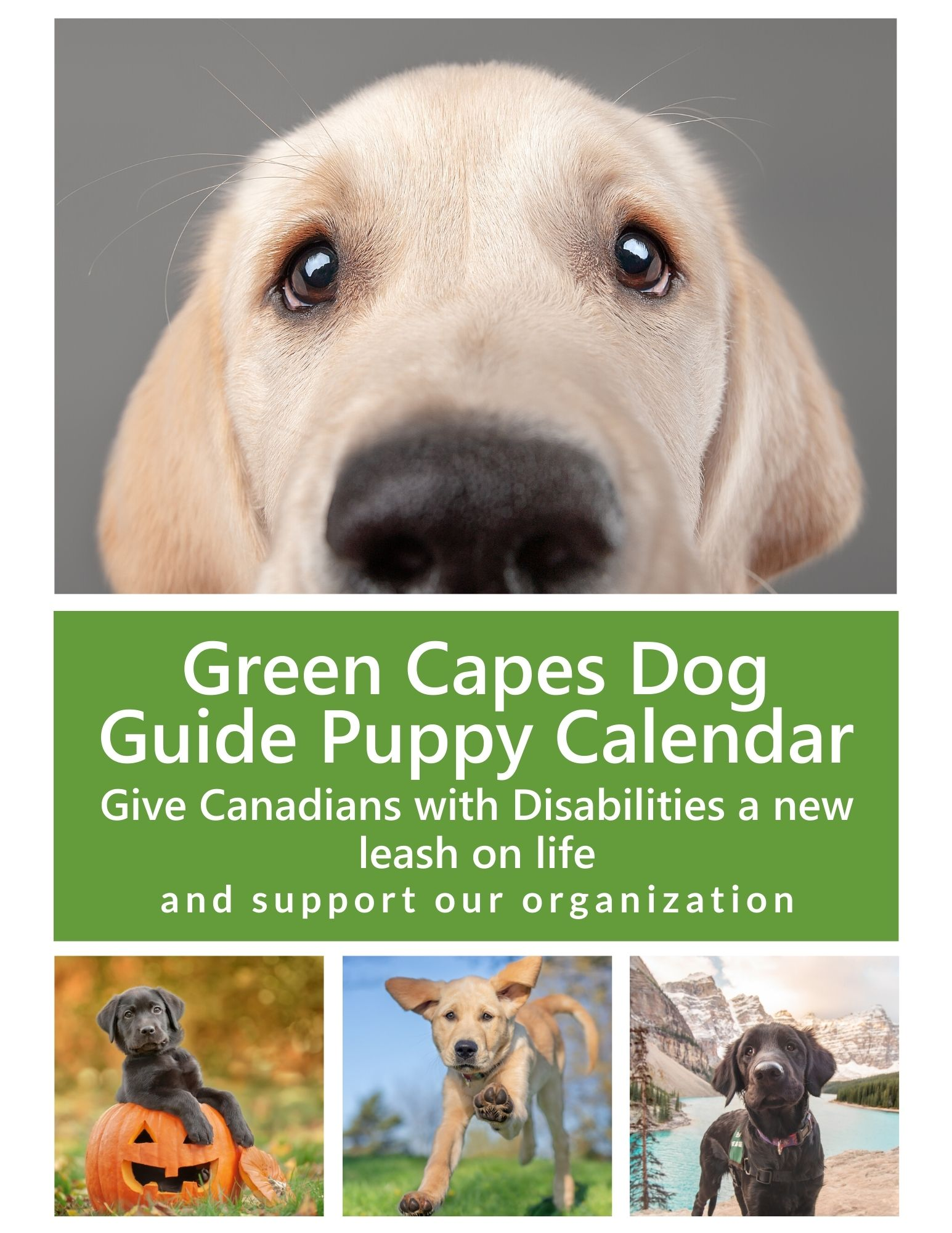 Yellow Lab Puppy beside text that says Dog Guide Puppy Calendar